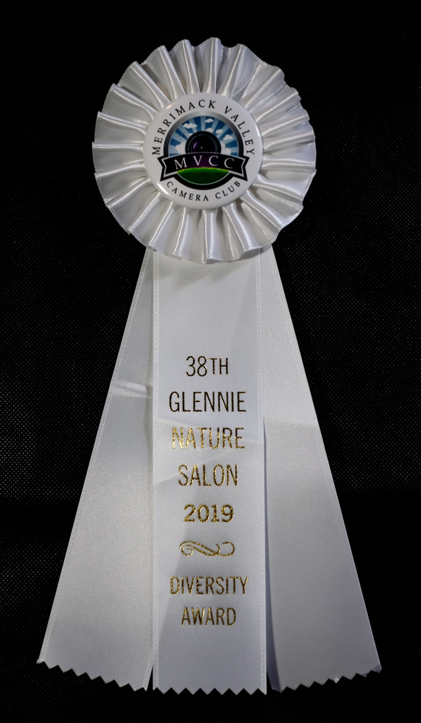 38th Glennie Nature Salon - Diversity Award